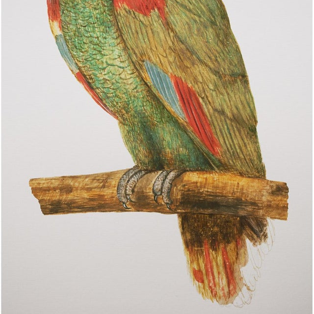 American Classical 1590s Large Print of Parrot by Anselmus Boëtius De Boodt For Sale - Image 3 of 8