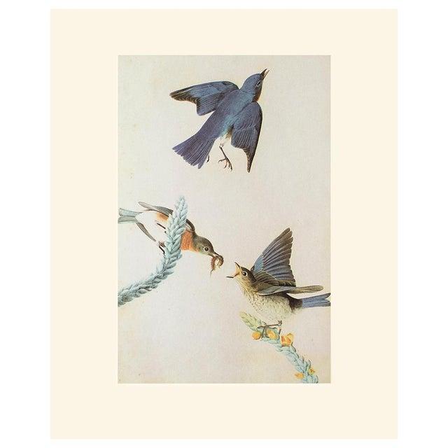 Royal Blue Eastern Bluebird by John James Audubon, Vintage Cottage Print For Sale - Image 8 of 8