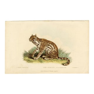 """""""The Ocelot"""", Hand-Colored Copperplate Engraving For Sale"""
