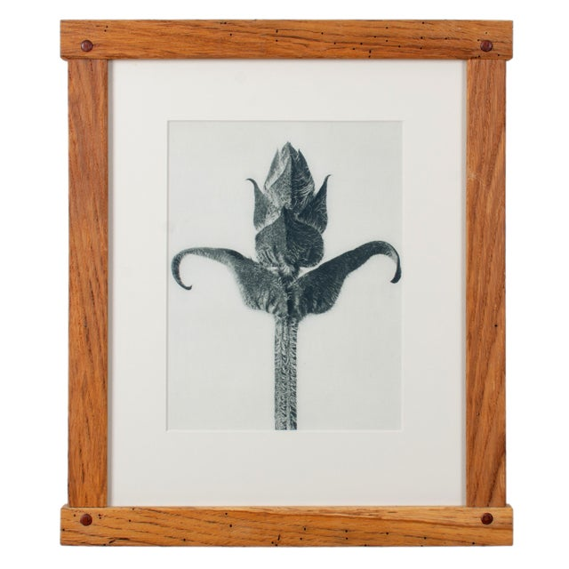 Wood Karl Blossfeldt Photogravures in Handcrafted Wormy Oak Frames, C.1929 - Set of 5 For Sale - Image 7 of 13