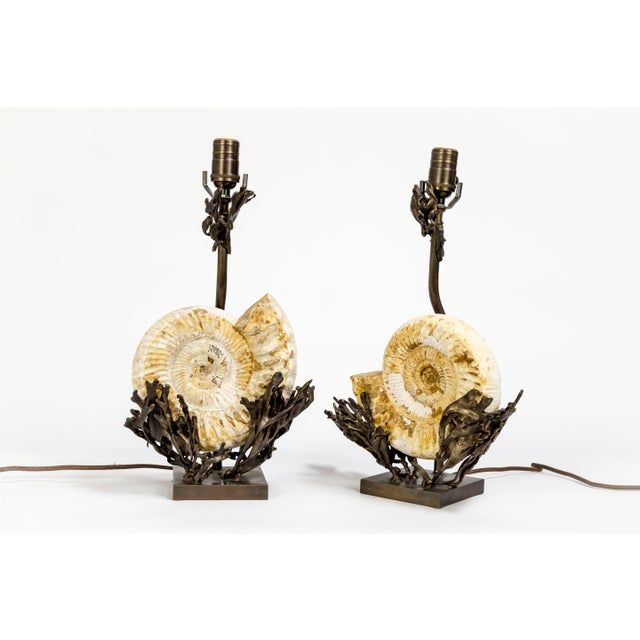 Contemporary Fossilized Nautilus & Bronze Laurasia Table Lamp by Tuell + Reynolds (2 Available) For Sale - Image 3 of 13