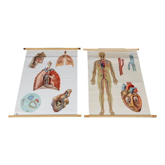 Vintage Circulatory and Respiratory Learning Poster - A Pair For Sale
