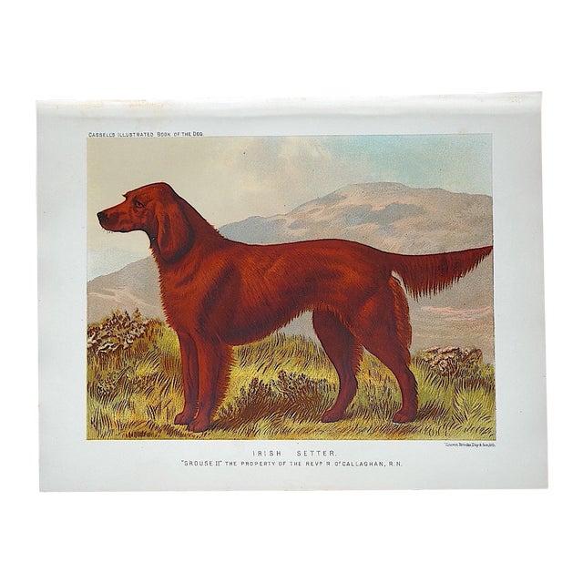Antique Dog Lithograph - Irish Setter - Image 1 of 3