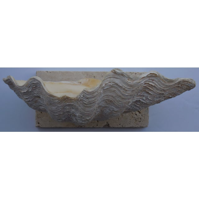 Natural Mounted Clam Shell - Image 11 of 11