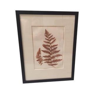 Natural Pressed Botanical in Frame For Sale