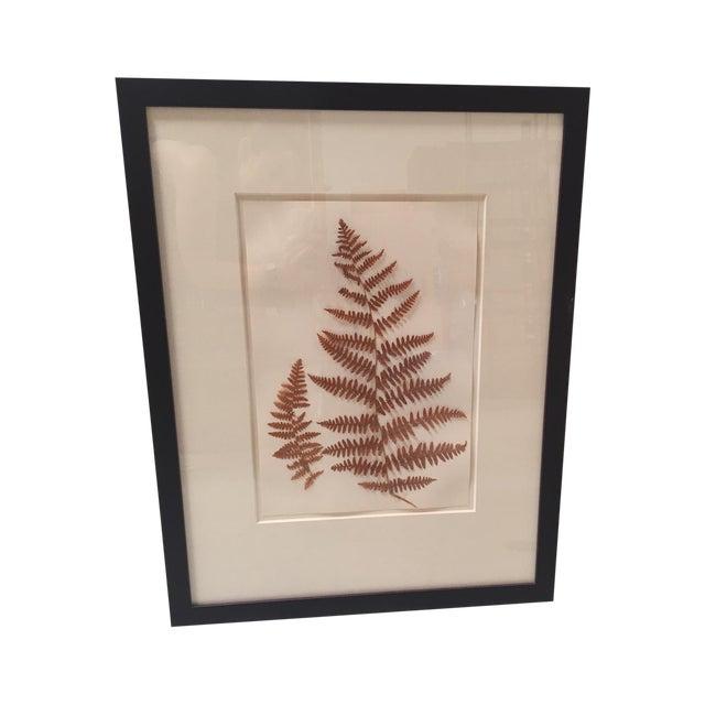 Natural Pressed Botanical in Frame - Image 1 of 3