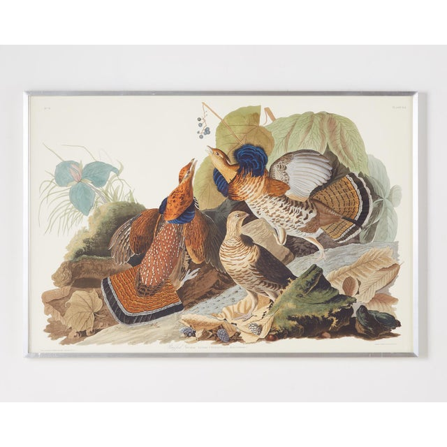 Audubon Ruffed Groüse Plate #41 Havell Edition For Sale - Image 12 of 12