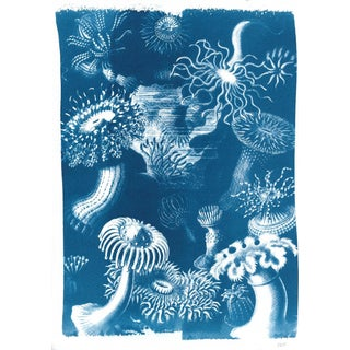Beautiful Fungus Drawing Scene, Limited Edition Cyanotype Print on Watercolor Paper For Sale