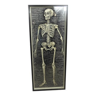 Artwork the Skeletal System 3D Picture For Sale
