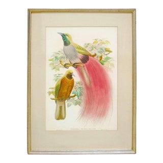 Paradisea Decora Ornithological Colored Lithograph by Gould