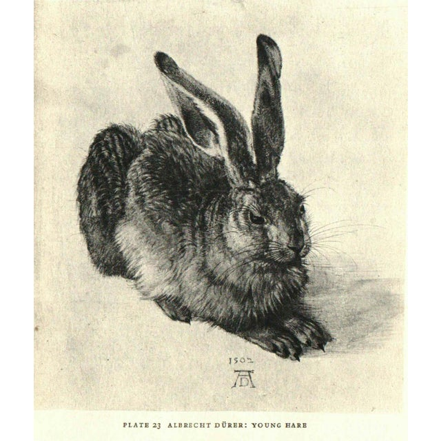Animal Drawings of Eight Centuries by Anna Maria Cetto. New York: Harper & Brothers, 1950. 90 pages. With 59...
