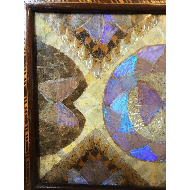 Brazilian Butterfly Wood Tray For Sale In Miami - Image 6 of 13