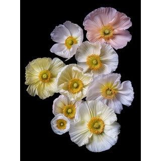 "Photographic Botanical Print, ""Floating Poppies"" Portrait by Artist Debi Shapiro For Sale"