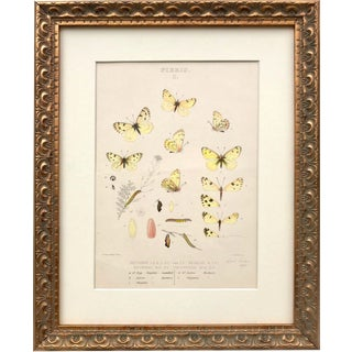 19th Century Antique Color Butterfly Lithograph For Sale