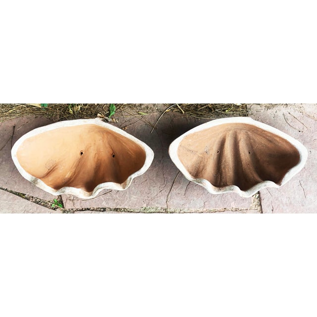 Aged Terra Cotta Conch Shells by Campo De Fiori - a Pair For Sale - Image 4 of 13