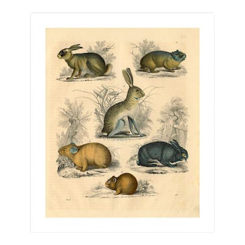 Antique 'Small Animals' Archival Print - Image 1 of 4