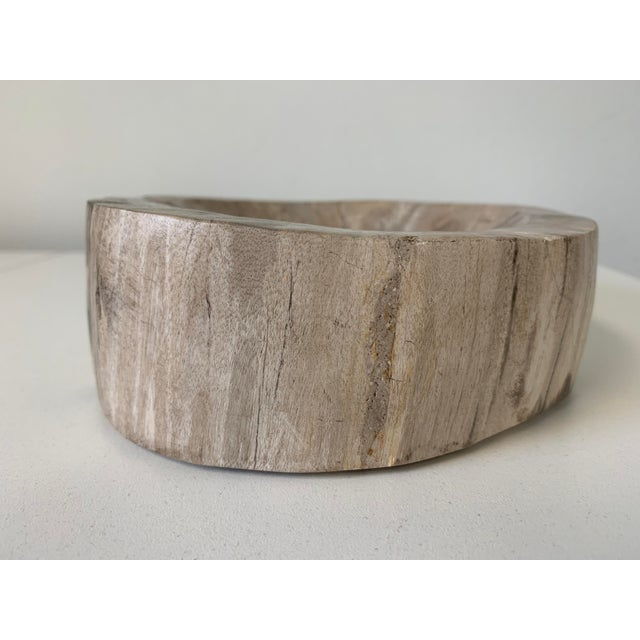 Petrified Wood Catchall Bowl For Sale In Orlando - Image 6 of 10