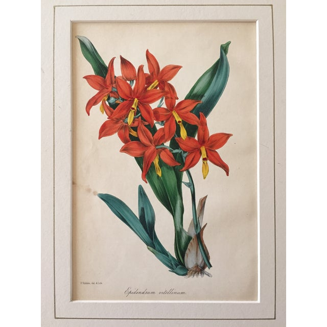 Traditional Floral Botanical Color Print 19th Century For Sale - Image 3 of 5