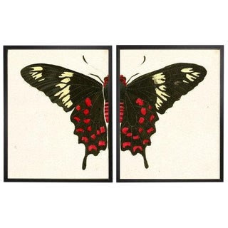 "Split Red and White Butterfly - 46"" X 29"" For Sale"