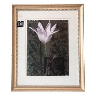 1990s Black & White Framed Tulip Photo by Baril For Sale