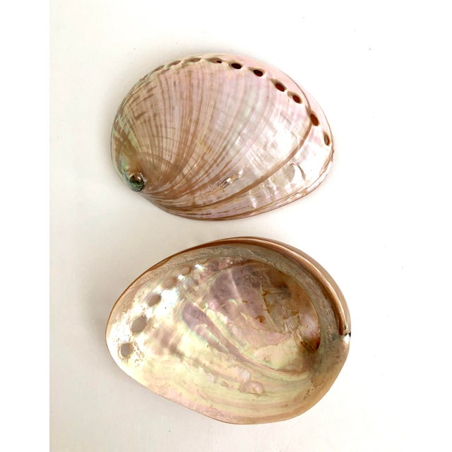 Boho Chic Australian Abalone Shells - a Pair For Sale - Image 3 of 5