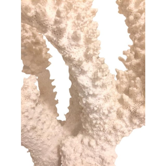 Nautical Bold Cast Plaster Coral Specimen - a Pair For Sale - Image 3 of 12