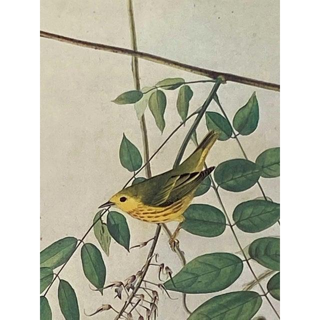 Realism Vintage Blue Eyed Yellow Warbler Bird Print For Sale - Image 3 of 5