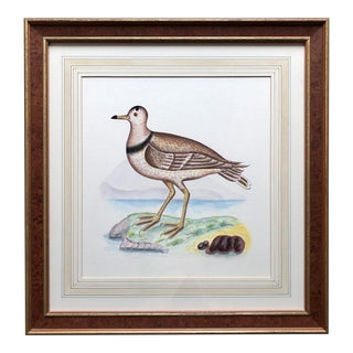 "Chelsea House Custom Matted and Framed Bird Print-24"" For Sale"