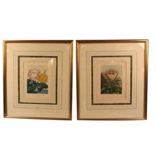 19th Century Thornton Botanicals - a Pair For Sale