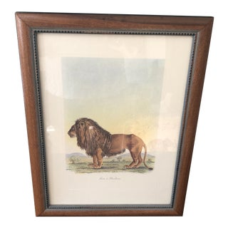 1960s Vintage Frederic Cuvier Lion Print For Sale