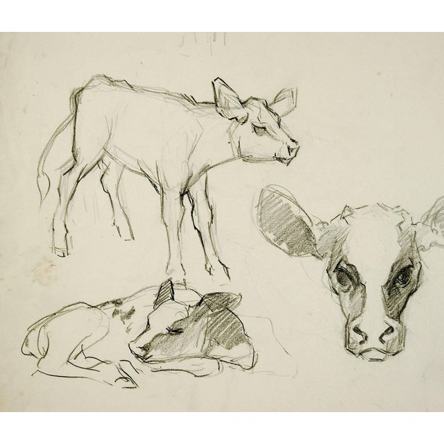 Pencil study of calves by George Baer (1895-1971). Unsigned, from the artists estate. Unframed, age toning, edge wear.