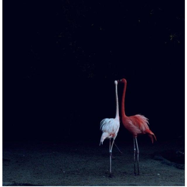 "Nicole Cohen ""Flamingos"" Pigment Print - Image 2 of 3"