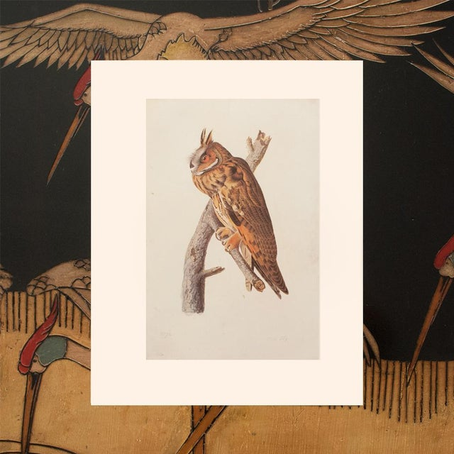Printmaking Materials Stunning Long-Eared Owl by John J. Audubon, Vintage Cottage Print For Sale - Image 7 of 10