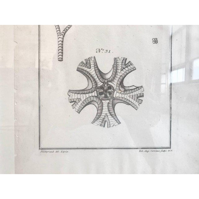 18th Century Rare French Engraving of Sea Star For Sale In Boston - Image 6 of 8