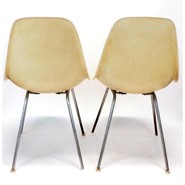 """A pair of Mid Century Modern """"parchment"""" color fiberglass shell chairs with chrome H base designed by Charles and Ray..."""