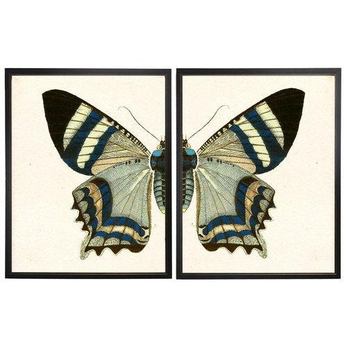 Split Blue and White Butterfly in Copper and Black Shadowbox 2 frames make up this set.