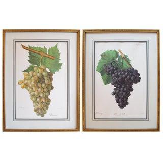 1901-1910 Antique Botanical Plates, Grapes (Framed) - a Pair For Sale