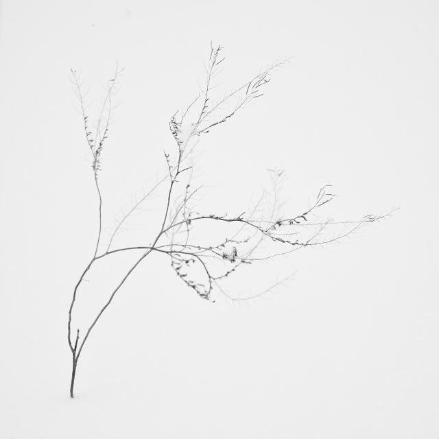 "Bryce Olsen ""Snow Shapes Study 4"" Framed Print - Image 2 of 2"