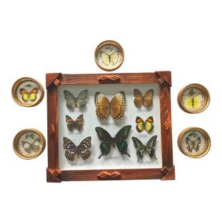 Vintage Rustic Framed Butterfly Specimans & Coasters