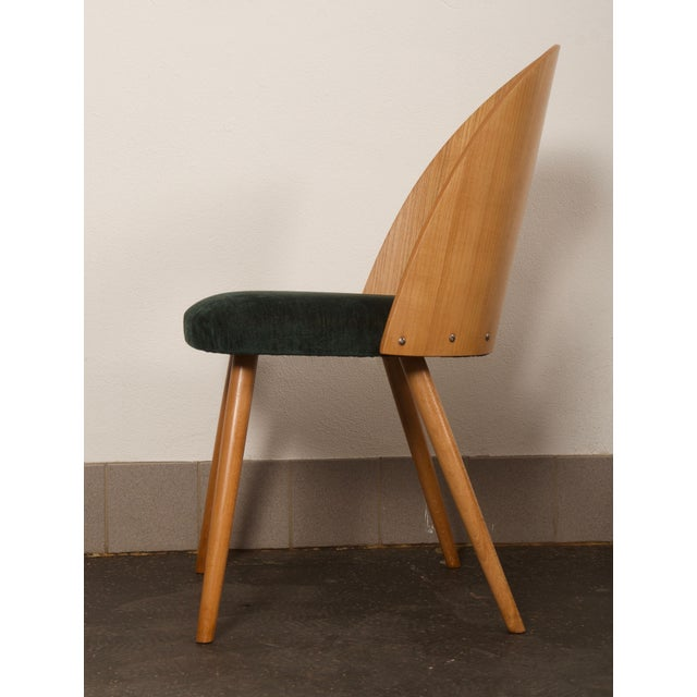 Ash Dining Chairs by Antonin Suman for Tatra For Sale - Image 6 of 10