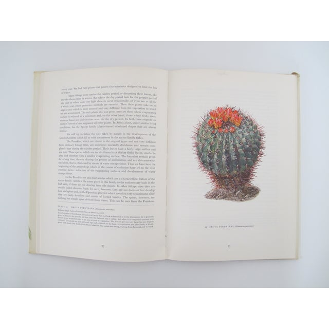 Cacti by Walter Kupper and Pia Roshardt - Image 5 of 7