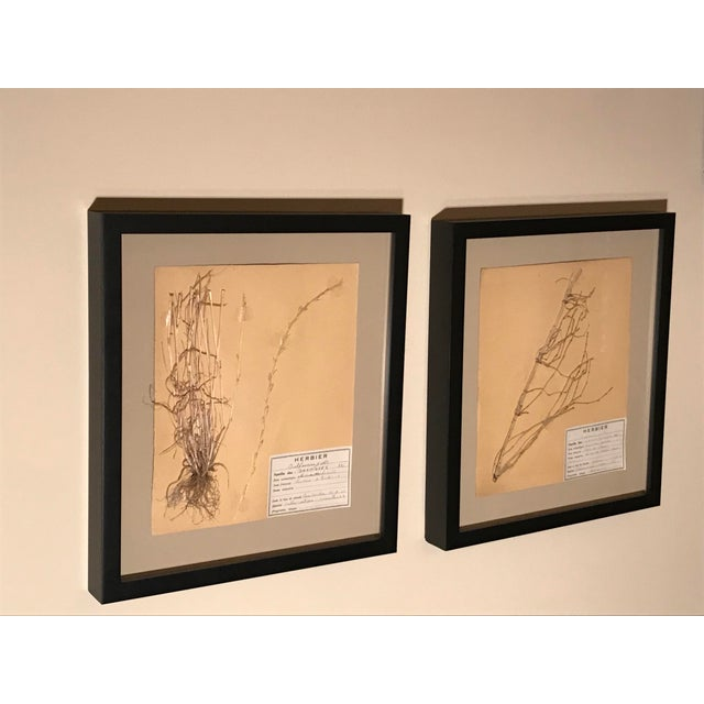 French 20th Century French Framed Herbier/Botanical Floral Art- 3 Pieces For Sale - Image 3 of 6