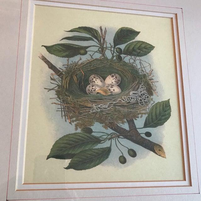 Vintage Bird Nest & Eggs Framed Print - Image 3 of 5