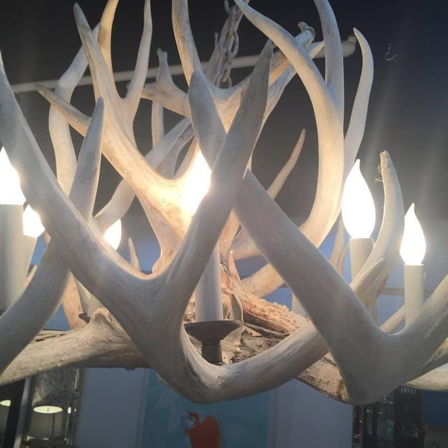 Antique Bleached Antler Chandelier For Sale - Image 4 of 7