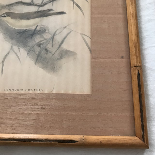 Early 20th C. Framed Avian Prints - A Pair For Sale In Los Angeles - Image 6 of 9