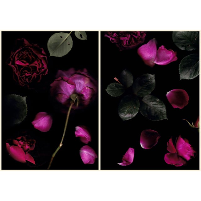 Contemporary Diptych Rosa Falstaff Limited Edition of 6 Photography by Francesca Wilkinson - 2 Pieces For Sale - Image 3 of 3