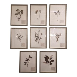 Antique Herbarium Framed Plants - Set of 8