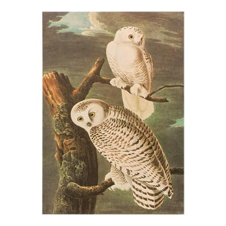Snowy Owl by Audubon, Vintage Cottage Style Print For Sale