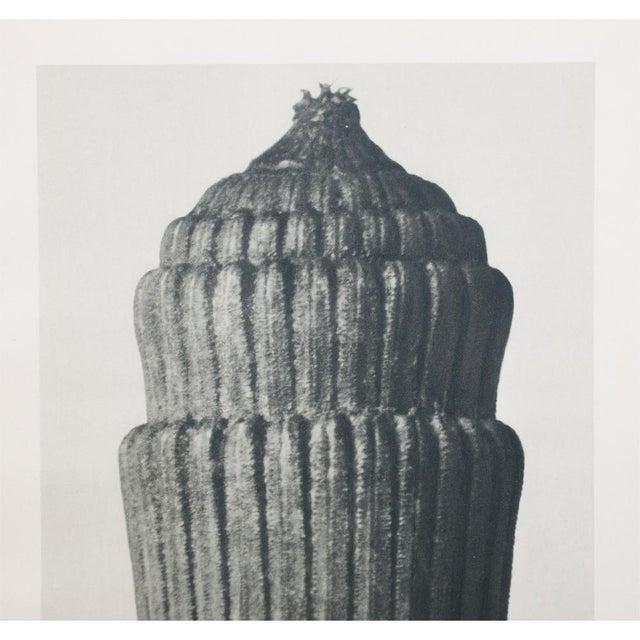 Karl Blossfeldt Two Sided Photogravure N1-2 - Image 3 of 9