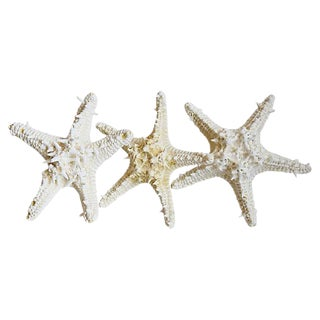 Large Natural Knobby White Starfish - Set of 3